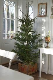 Save for some candles, a plain tree that looks just lovely.
